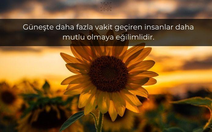 Güneşte daha fazla vakit geçiren insanlar daha mutlu olmaya eğilimlidir.