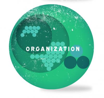 Holakrasi Organizasyon Modeli